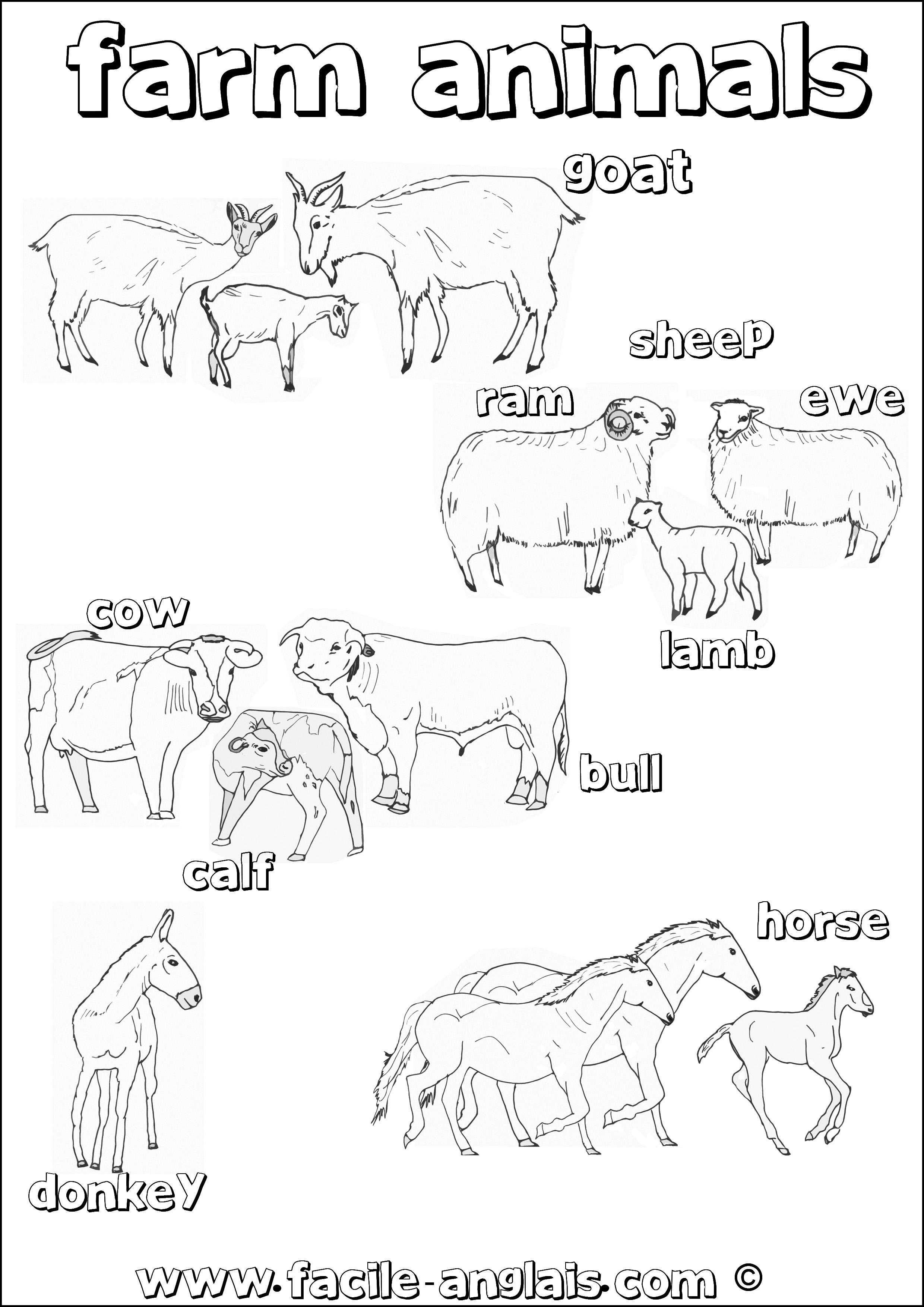 Coloriage En Anglais.Coloriage Sur Les Animaux De La Ferme En Anglais Farm Animals