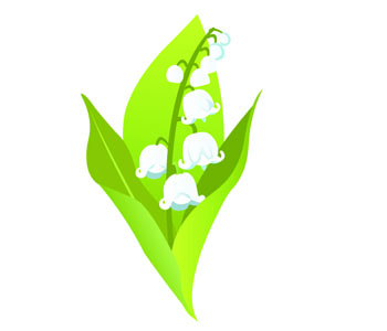 Lily of the valley, May lily